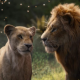 Oscar Contender: Visual Effects <em>The Lion King</em>