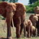 The Musical Journey in <em>The Elephant Queen</em>