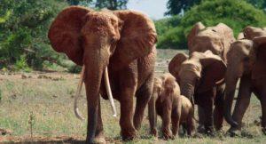 Elephant_Queen_Unit_Photo_01.1