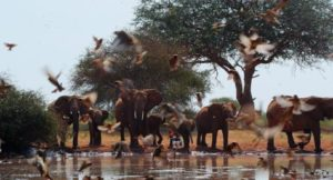 Elephant_Queen_Unit_Photo_05.1