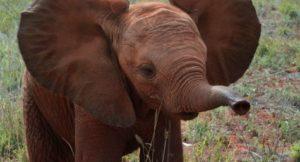 Elephant_Queen_Unit_Photo_06.1
