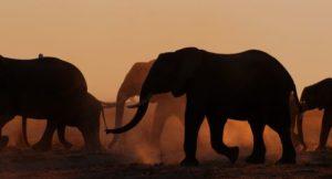 Elephant_Queen_Unit_Photo_10.1
