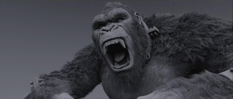 Kong - fur pass