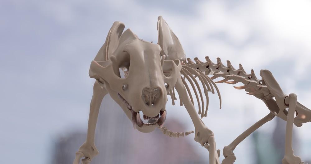 Valentine Skeleton