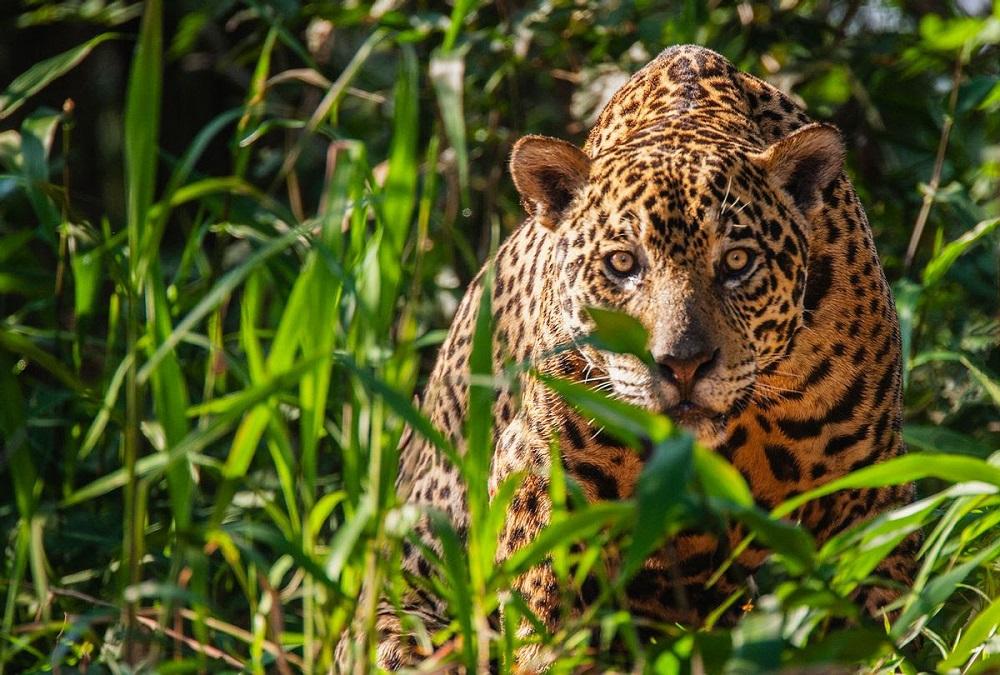 Still from Tigre Gente